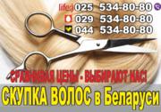 Скупка волос в Минске. Дорого