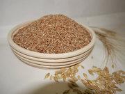 Зерно,  пшеница для проращивания.